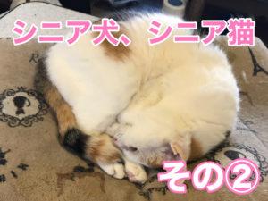 シニア犬、シニア猫②