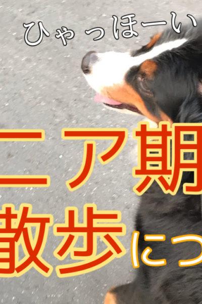 高齢わんちゃんのお散歩!