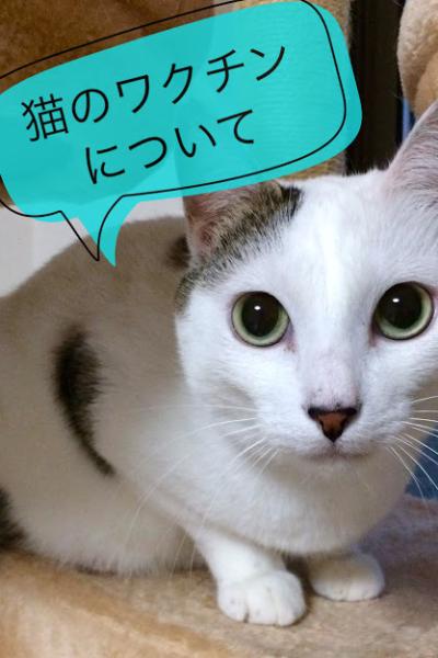 猫の混合ワクチンについて知ろう!