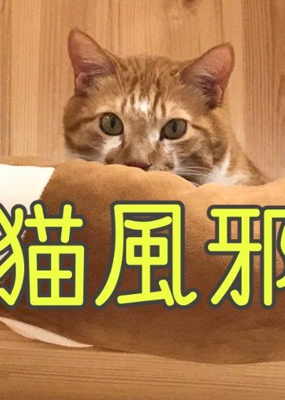 猫風邪って何?