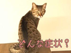 猫風邪の症状について