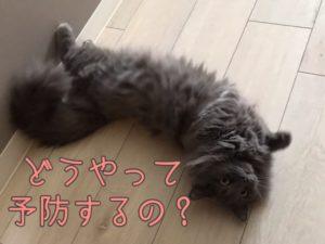 猫風邪の予防